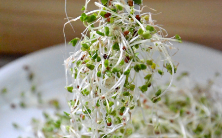 Broccoli sprouts on a fork